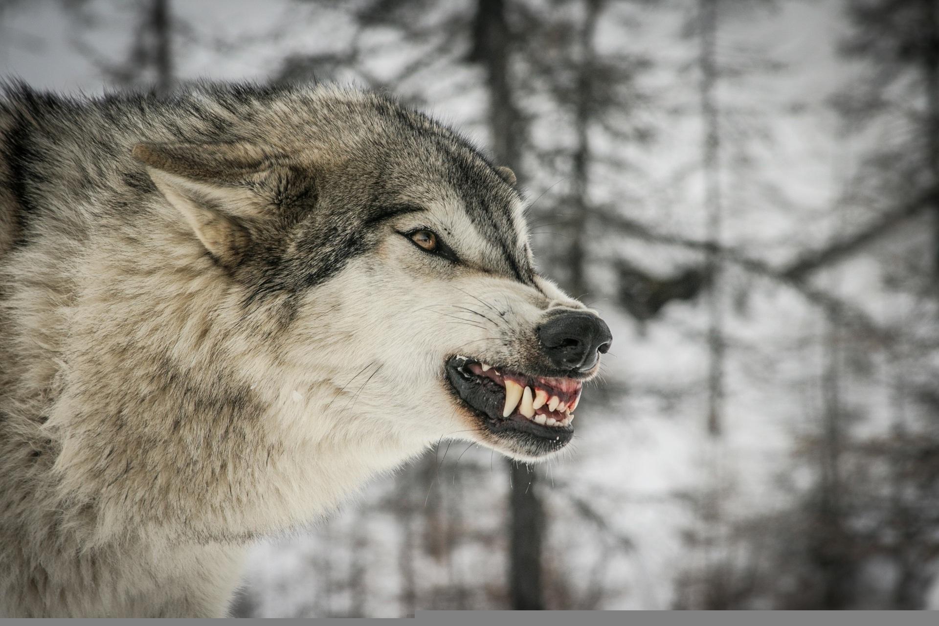 интервью себе картинки волки злятся можете